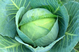 Knowing Cabbage Vegetables & Recipes For Cooking Cabbage